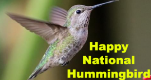 National Birds Day 2020
